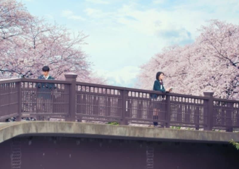 (C)2017「君の膵臓をたべたい」製作委員会(C)住野よる/双葉社
