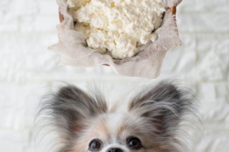 犬undefinedチーズundefined食べて良いundefined量undefined病気undefined薬undefined食べ合わせ