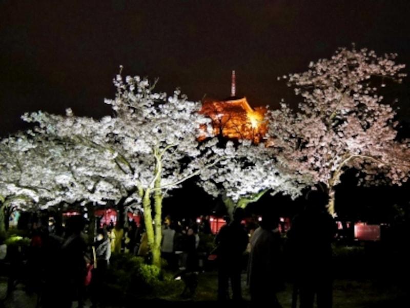 「観桜の夕べ」期間中は21:00まで開園。桜並木や三重塔などのライトアップが楽しめます(2017年4月8日撮影)