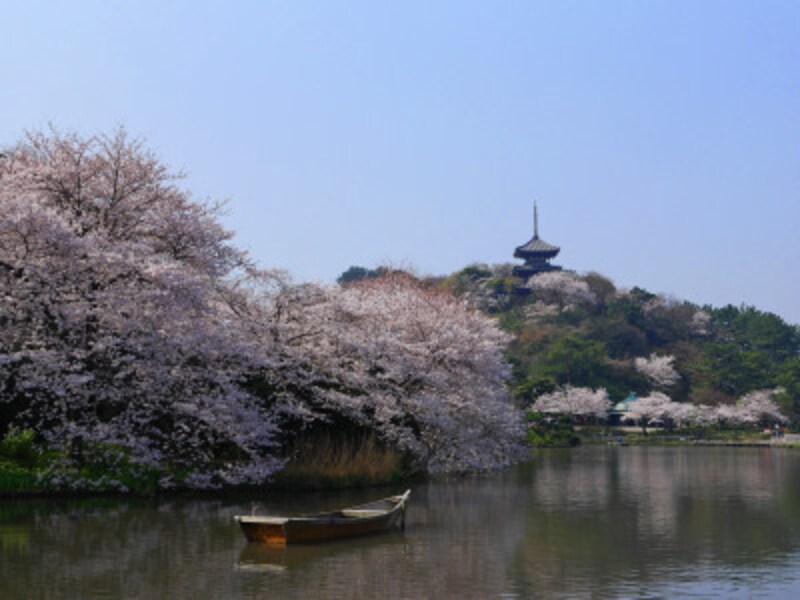 大池周辺にはソメイヨシノが美しく咲き誇ります(2018年3月28日撮影)