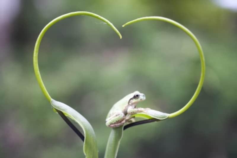 蛙のうたが聞こえてくるよ♪