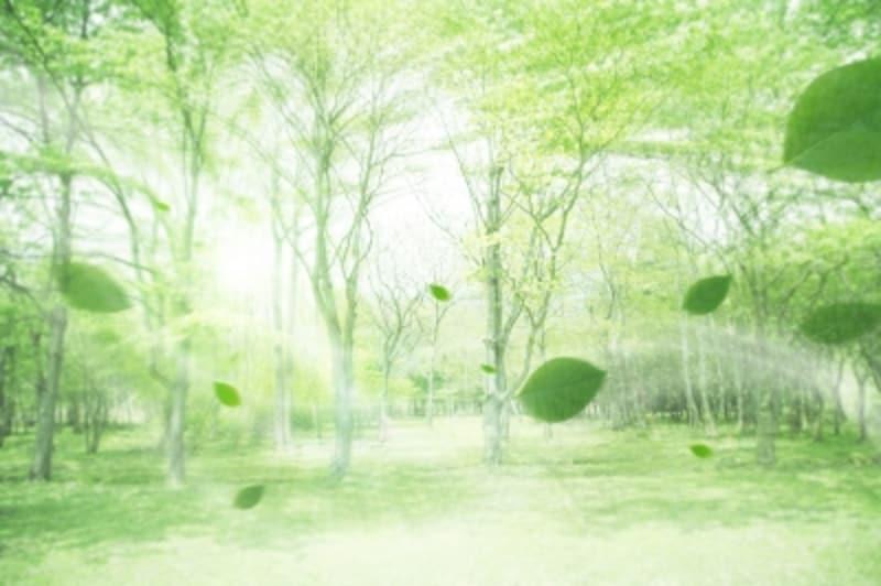 風薫る季節。木々のある公園を散策してもいいですね