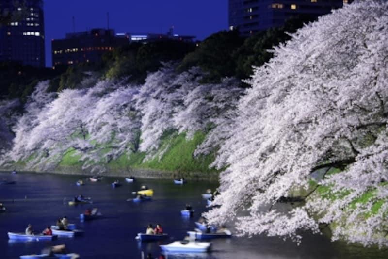 ボートからみる桜