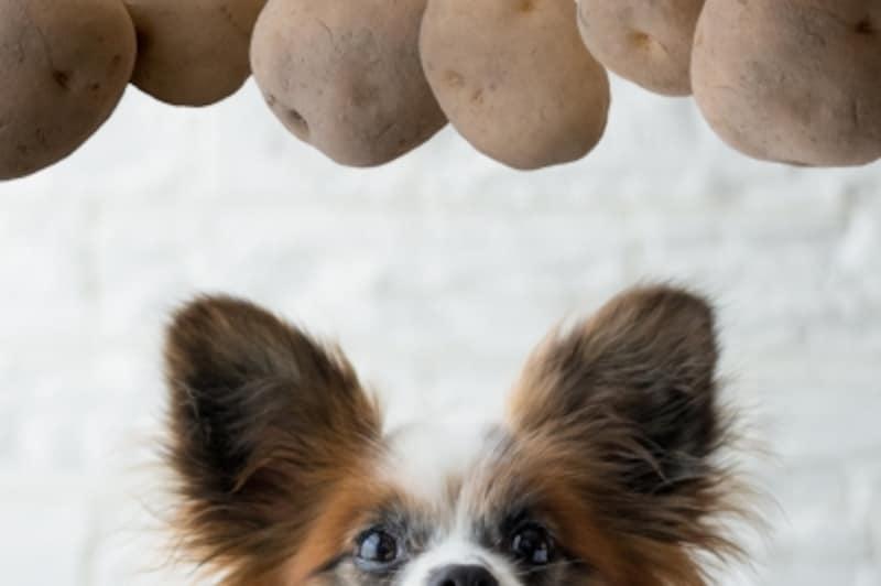 犬undefinedじゃがいもundefined食べて良いundefined量undefined病気undefined薬undefined食べ合わせ