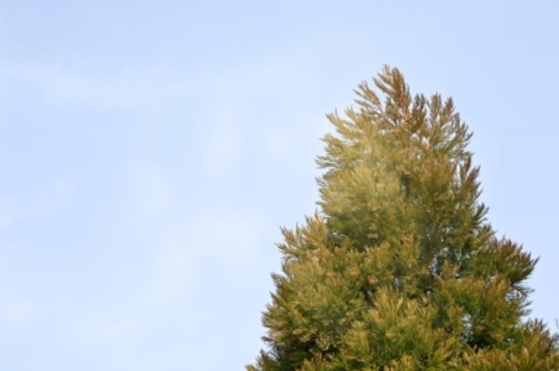 春先の花粉の時期を何とか乗り切りたいものです