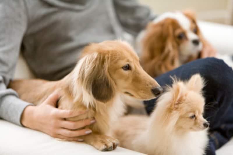 犬の爪切りでギロチンタイプなど愛犬に向いている道具・自宅でするときの注意点
