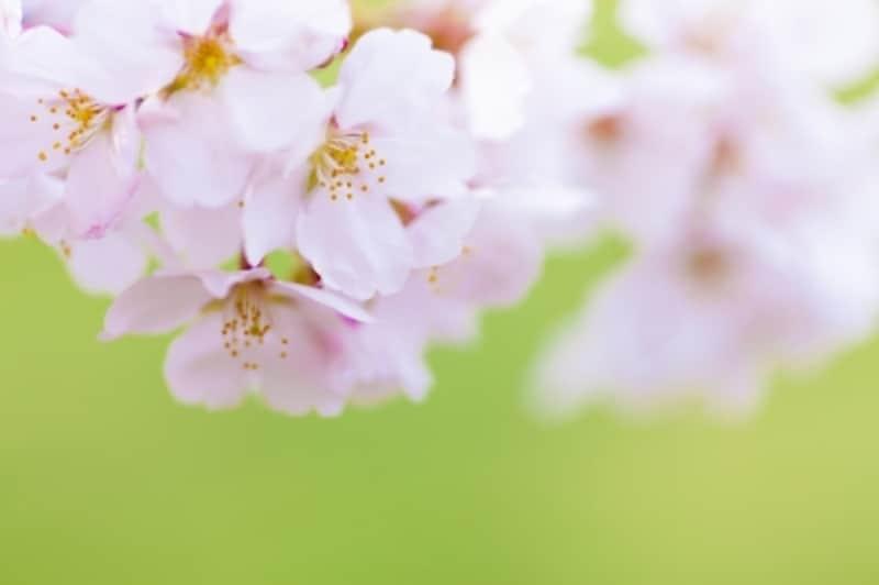 春の花にちなんだ名前