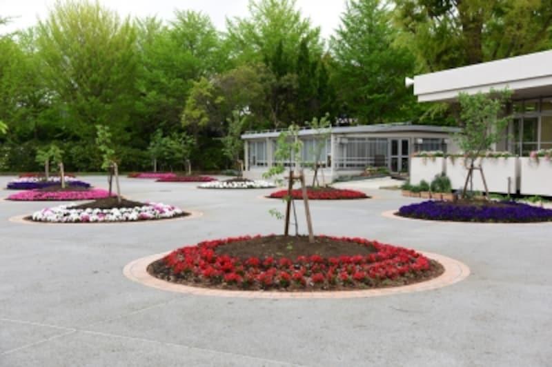 第一展示場横の池を埋め立てて新設した「玉縄桜広場」。園内の他の場所から移植した木と若木が植えられた