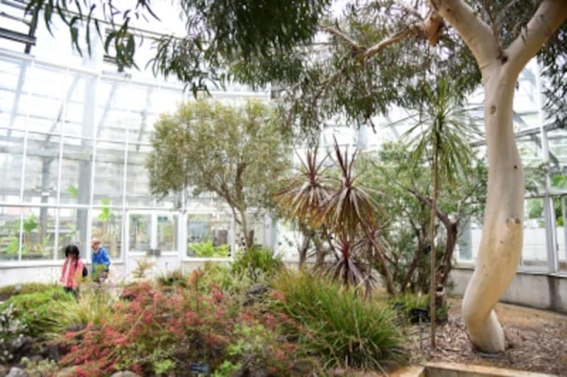 「鑑賞温室」の内部