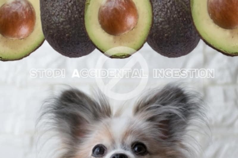 犬undefinedアボカドundefined致死量undefined中毒undefined食べて良いundefined量undefined病気undefined薬undefined食べ合わせ