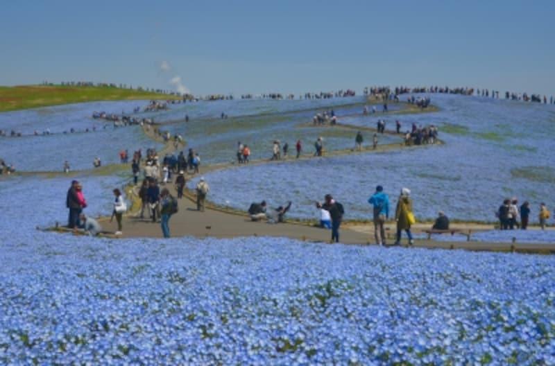 「国営ひたち海浜公園」