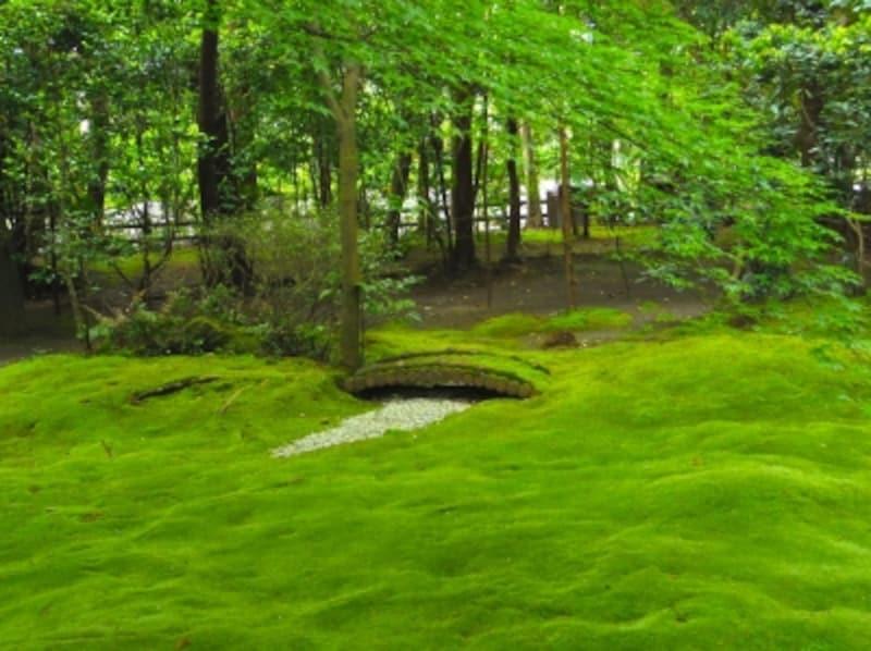 野宮神社のじゅうたん苔