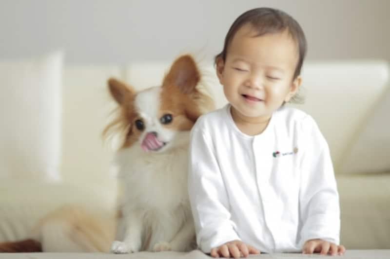 赤ちゃんとパピヨン