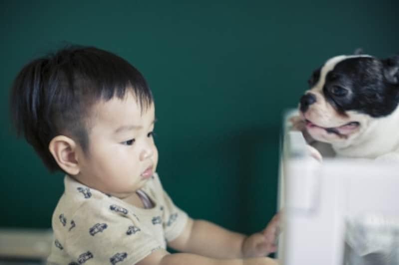 赤ちゃんのフレンチブルドッグ