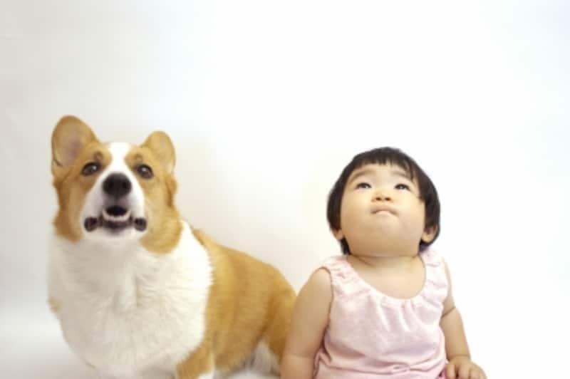 赤ちゃんとコーギー