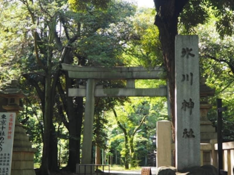 赤坂氷川神社境内には銀杏の古木などがありいい雰囲気だ