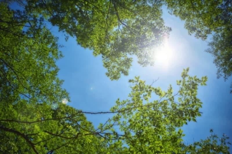 ESG投資は環境・社会・統治の3つの基準を使って投資!