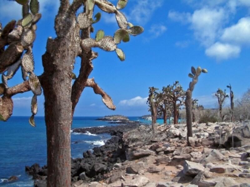 海と溶岩とサボテン