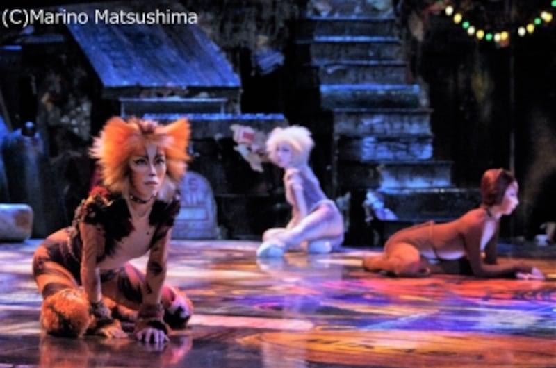 会見中、マイペースに佇む猫たち。(C)MarinoMatsushima