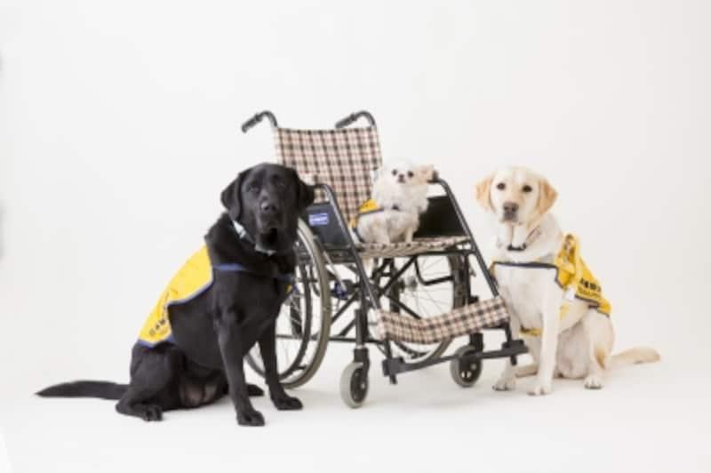 補助犬(介助犬・盲導犬・聴導犬)