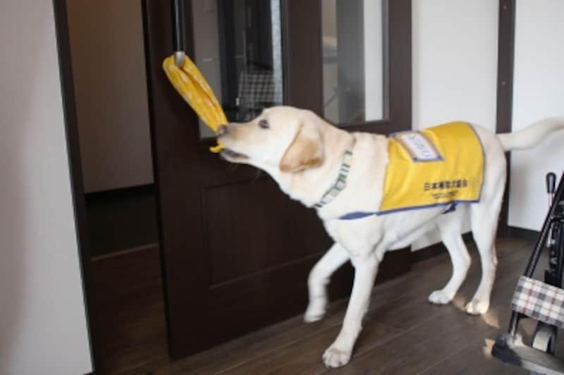 補助犬の仕事1