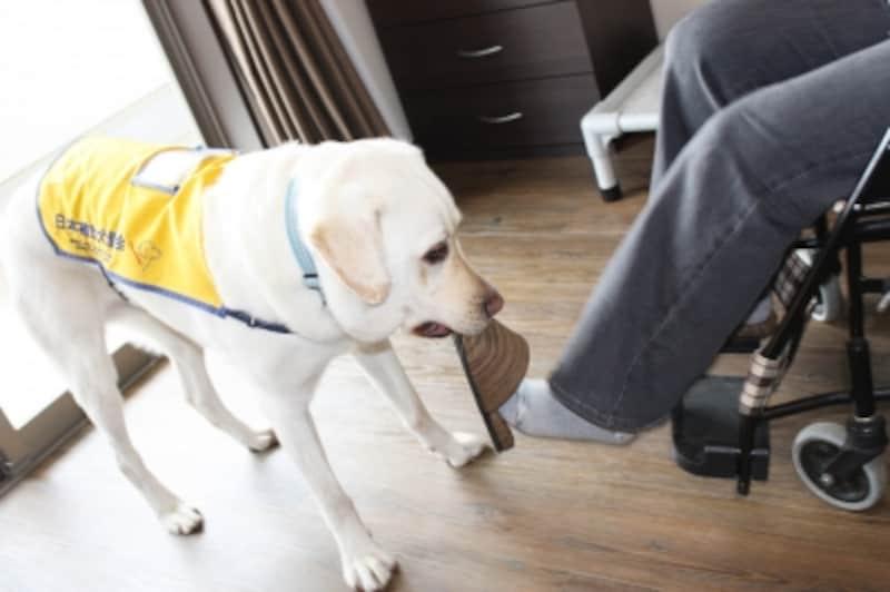 補助犬の仕事2