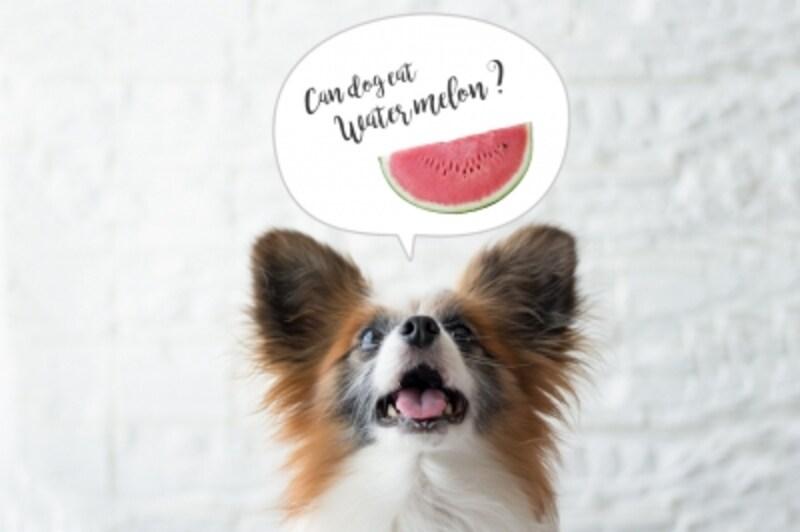 犬undefinedスイカundefinedすいかundefined食べていいundefined食べちゃったundefined与えていいundefined量undefined食べちゃだめ