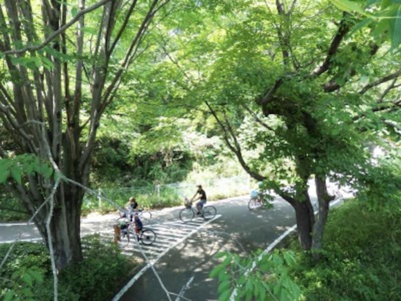 全長約17キロのサイクリングコース