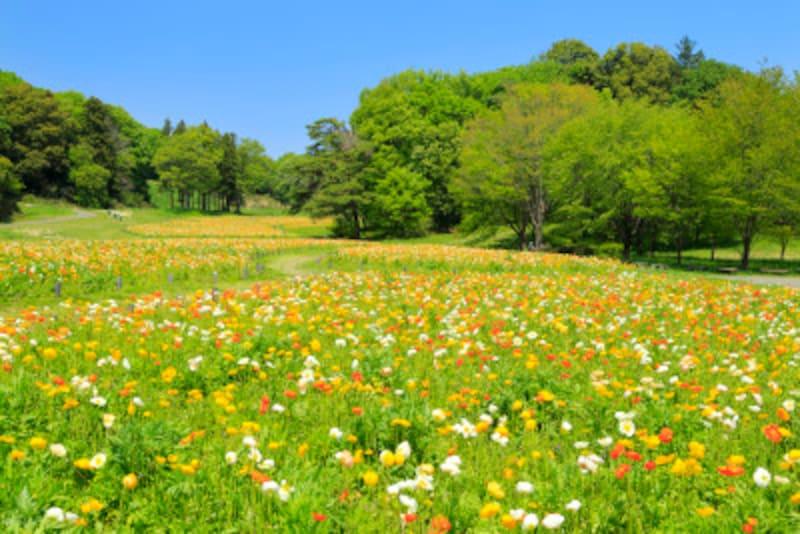 武蔵丘森林公園
