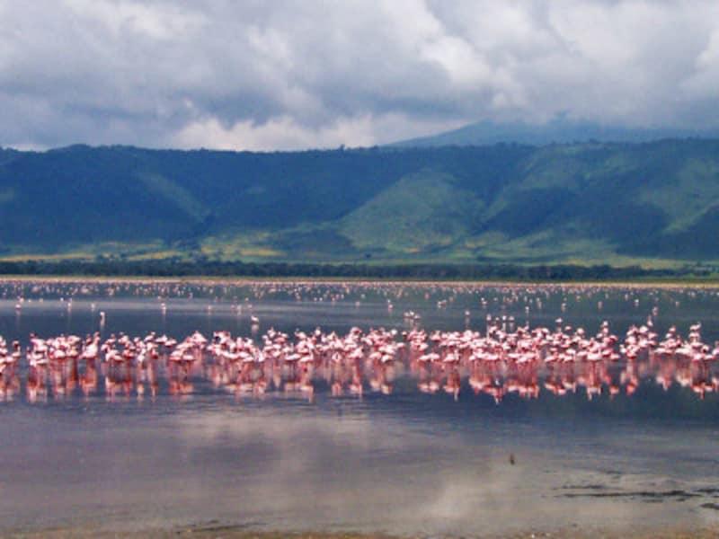ンゴロンゴロ・クレーター内部、マガディ湖のフラミンゴ