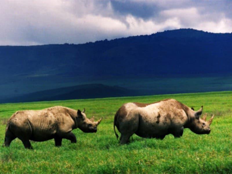 IUCNレッドリスト絶滅寸前種のクロサイ