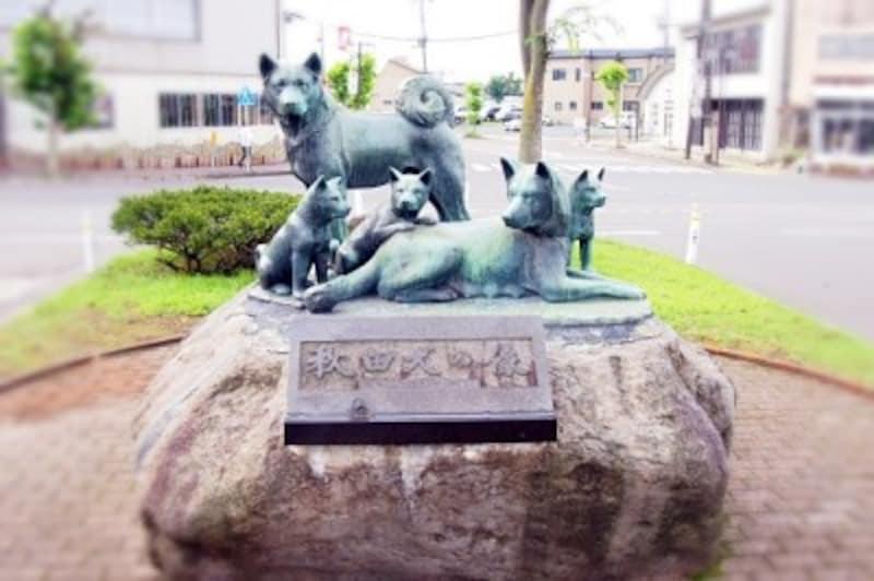 秋田犬群像