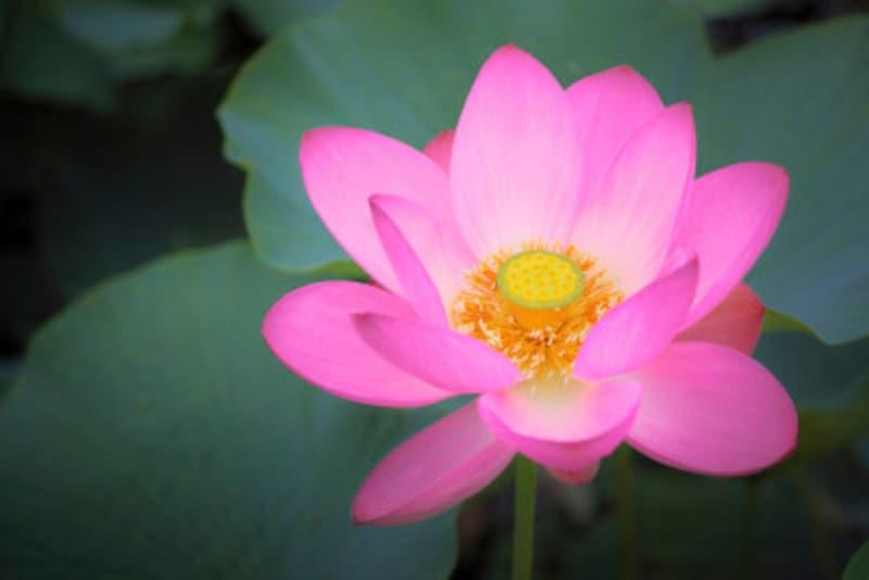 お盆とは、仏教の「盂蘭盆会(うらぼんえ)」が正式名称
