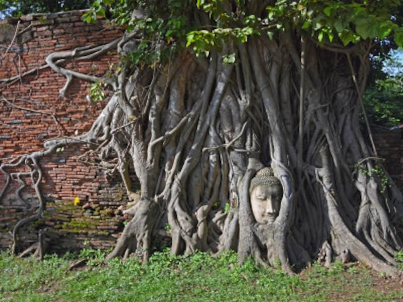 アユタヤ歴史公園、ワット・プラ・マハータートの象徴的な仏頭