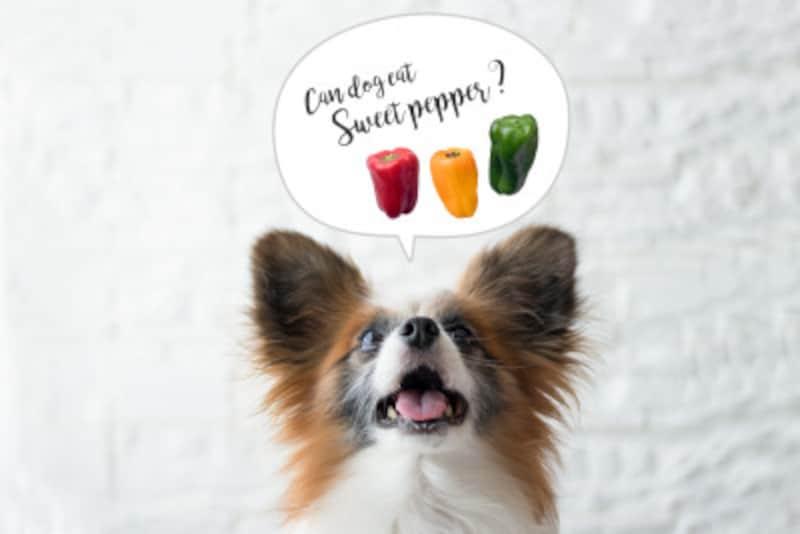 犬 ピーマン パプリカ 食べていい 食べちゃった 与えていい 量 食べちゃだめ