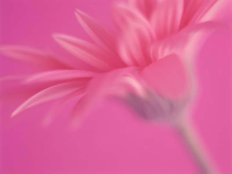 ピンクが好きな人は、収支全体を見直してみると、意外な無駄遣いに気づくかも?