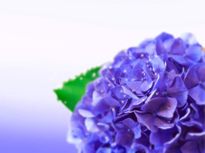 紫が好きな人は、臨時収入が入ったときに、投資を始めるとよいかも?