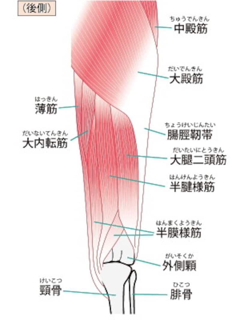 脚痩せ作りに欠かせない大事な筋肉をチェックして、効率よく引締め効果をアップして!