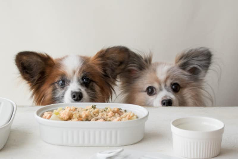 犬がご飯を食べない時の対処法