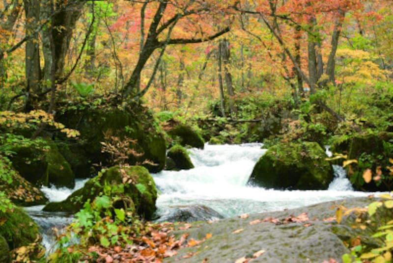 青森 観光 季節 秋 紅葉 十和田湖・奥入瀬渓流