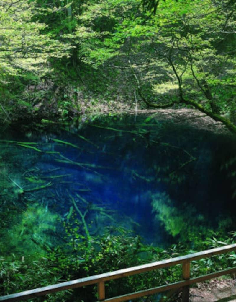 青森 観光 おすすめ 十二湖 青池