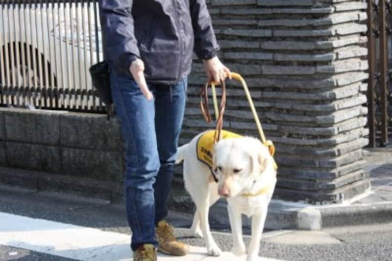盲導犬-指示された方向へ