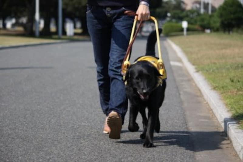 盲導犬-町中での歩行