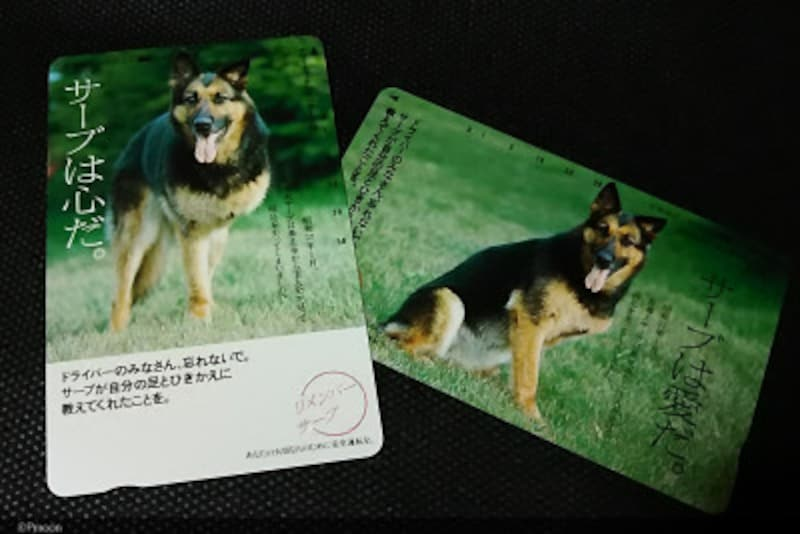 盲導犬サーブのテレホンカード