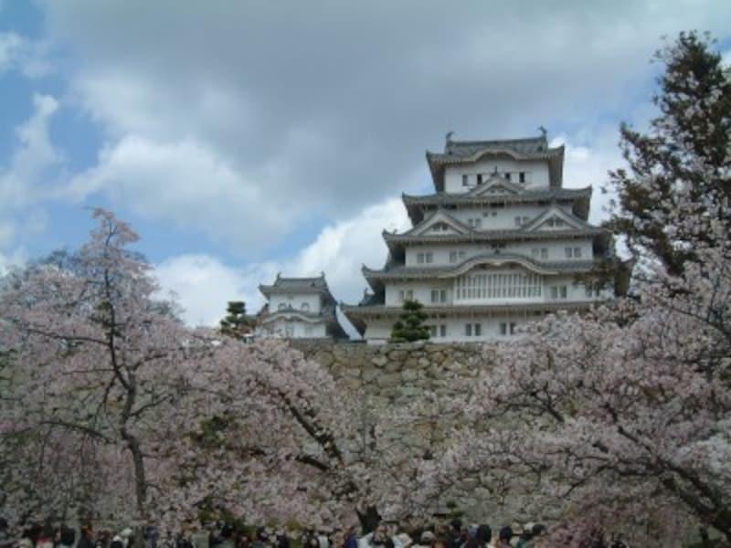 姫路城(24)/桜