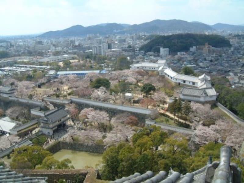 姫路城(25)/桜