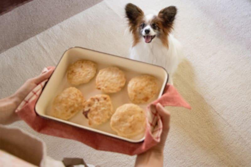 犬 豆腐ハンバーグ レシピ 作り方 材料 簡単 犬ごはん 犬おやつ 量 適量