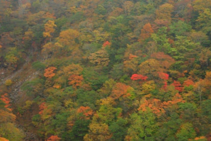 日光 紅葉 霜降高原