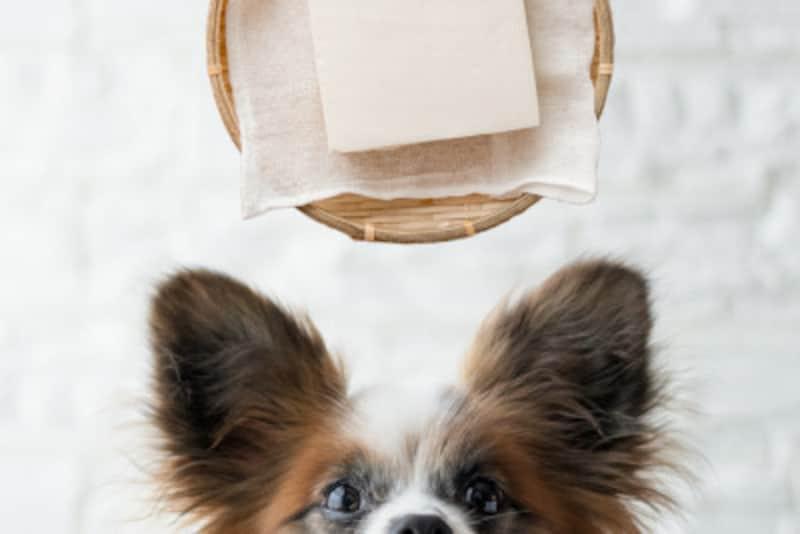犬 とうふ 豆腐 食べていい 食べちゃった 与えていい 量 食べちゃだめ