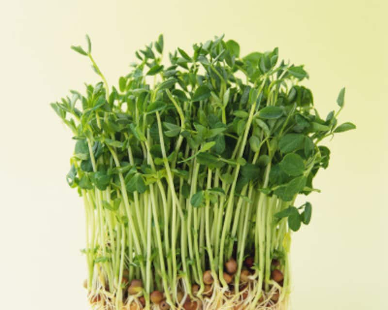野菜が高い時期でも価格が高騰していない室内栽培の野菜を使う